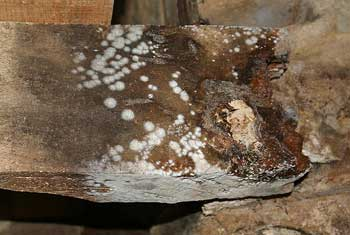 Buy Boron Treatments For Woodworm