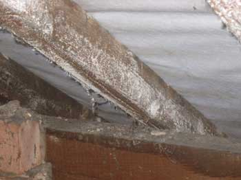 Extensive mould growing on roof timbers